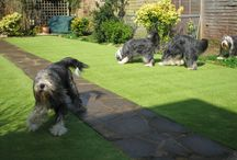 Artificial Grass / Artificial grass is perfect for families with pets and small children, see examples here