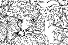 Colouring pages / Cool,and majestic