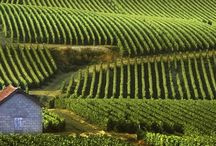 Vineyards of the World