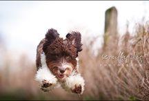 Doggies / by Violet Vaughn