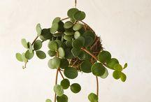 G R E E N   plant wishlist