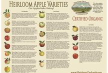 Heirloom Apples / Heirloom apples and products