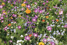 garden plans / by Tara Salsman