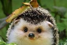 Cute animal pictures from internet / I love animals and i love to see cute animal pictures so i want to share thos what i find