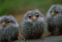 CRITTERS: Owls
