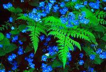 Shade Gardens (Árnyékos kertek)
