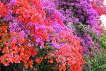 květiny v truhlicich