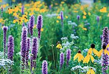 Gardening / You'll find gardening stories in our Saturday At Home sections. We'll help you plant trees and landscape and have even the Joneses swooning at your lawn in no time.  / by Argus Leader