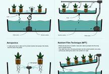 Hydro Gardening