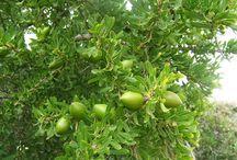 TRAITEMENT D'HUILE ULTRA NOURRISSANTE / L'huile d'Argan, souvent nommée 'L'or liquide du Maroc', est une huile produite à partir des graines d'arganier, endémique au Maroc, qui est appréciée pour ses nombreuses propriétés médicinales nutritives, cosmétiques. L'arganier ne pousse que dans le sud-ouest du Maroc.