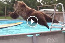 videá zvieratká