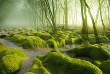 Mysterious Forest Where You Love To Get Lost / You love these amazing fairy tale forests. Look at those pictures, don't you feel go there and get merged in! These stunning pictures are collected from all over the world's mysterious forests. Go through and get into it.