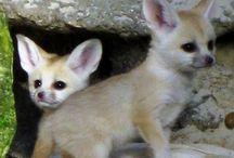 animals babies so cute
