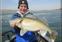 Walleye Fishing / Walleye fishing information, photos, hotspots, fishing maps, and regions.