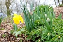 Frühlingsgefühle 04 | 2012 / Die ersten Knospen sprießen, die ersten Blumen blühen – der Frühling hält Einzug in Jade. Rund um die Agentur ist es bunt und sonnig. So gefällt uns das :-)