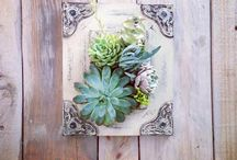 succulents frames