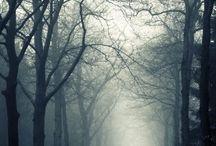 Erdő, Forest