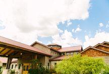 Camp Lucy: Sacred Oaks