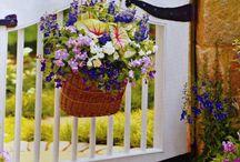 Gardens / by Shelia Williamson