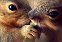 Όμορφα πλάσματα