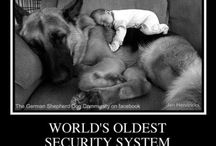 Home Security Humor / by LifeShield Security