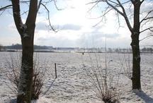 Weißer Frühling 03 | 2012 / In Norddeutschland ist es nicht ungewöhnlich, im Februar/März noch Schnee im Garten liegen zu haben. Dafür sorgt hier das maritime Klima. Ein bunter Frühling wäre uns jedoch etwas lieber.