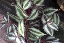 Silver gray plants at My Garden / Silver is the new black. Great to brighten a dark corner and make any color pop