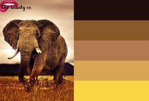 Paletas de cor / Não sabe qual cor usar hoje? Te dou uma ajudinha :)