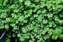 Green thumbs / Gardening/Eco friendly