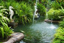 Zen & Oriental Garden