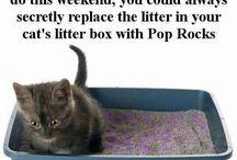 Interesting Pet Parenthood