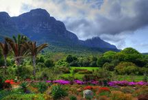 Cape Town Nature / One of the worlds most beautiful places!!!