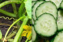 Alimentos Sanos / Alimentos que son sanos para nuestra salud, comiendo estos alimentos nos estamos nutriendo y cuidando.