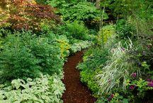 Garden:  Dappled light