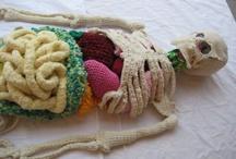 Anatomy crochet / Anatomía en crochet