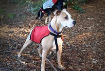 Upcycled Dog Coats! / These cute coats are upcycled from either pre-consumer factory waste or actual returned Patagonia Jackets!