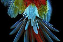 Bird~色鳥~