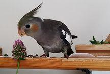 Ptactvo - Tweety, Kája, Pepína
