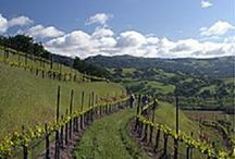 "Favorite ""GREEN"" Wineries #EarthDay / by Wine.com"