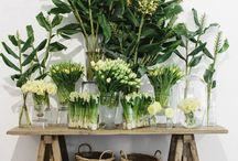 plants compositions