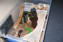 hermit crab habitat ideas / by Amy Kinsey