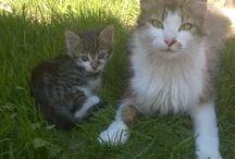 I ❤ CATS / Cat