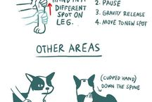 Dogs Care Remedies