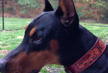 Pets leather jewels