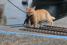 Gatitos Pescadores