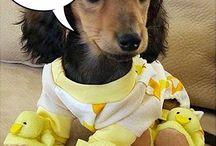 Cachorrinhos fofos / vestidos