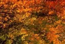 Fall foliage / by Mary Kay Killian