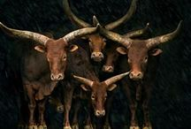 Give it Horns! / Horned animals - awkward or fascinating?