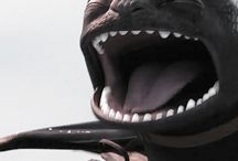 Toothless / Dragon