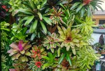 Walks of green - vertical gardens